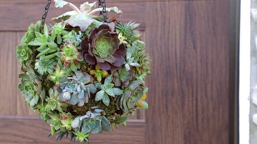 succulent orb hanging planter