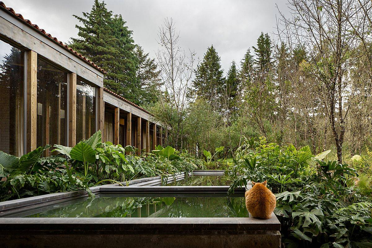 Reflective-pools-Jacuzzi-and-natural-forest-around-the-mexican-home-make-it-a-visual-treat-42166