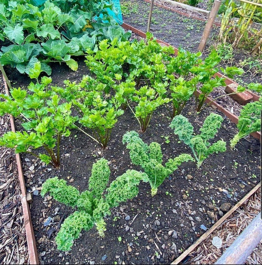 Preparing your garden for the next season