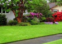 lush yard with green grass and plants