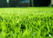 Sod vs. Seed - Which is Better For You?