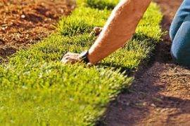 Sod Versus Seed—Which is Better For You & Your Yard?