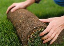 person rolling out strip of sod