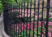 pink flowers behind wrought iron fencing