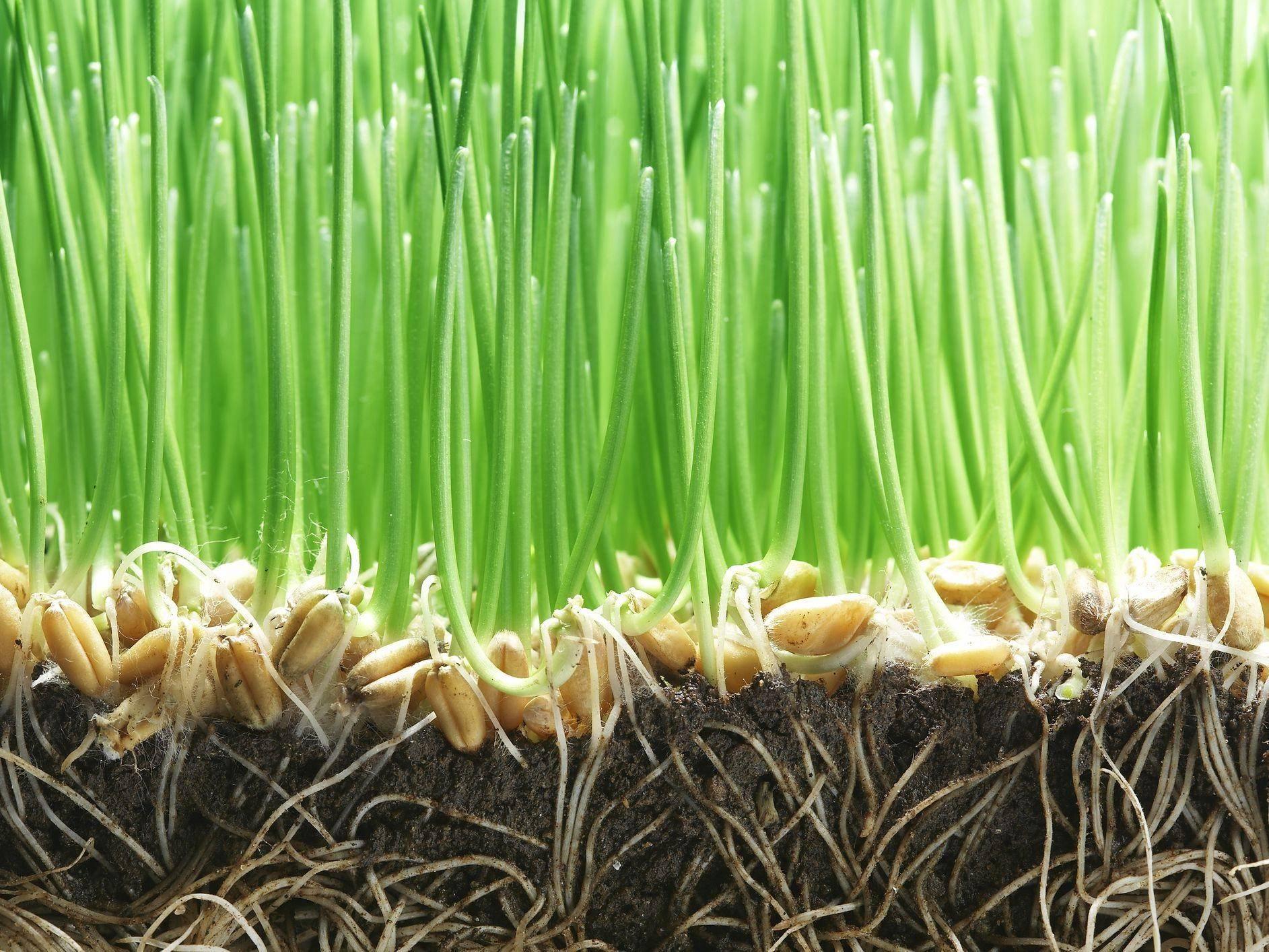 close up of growing grass