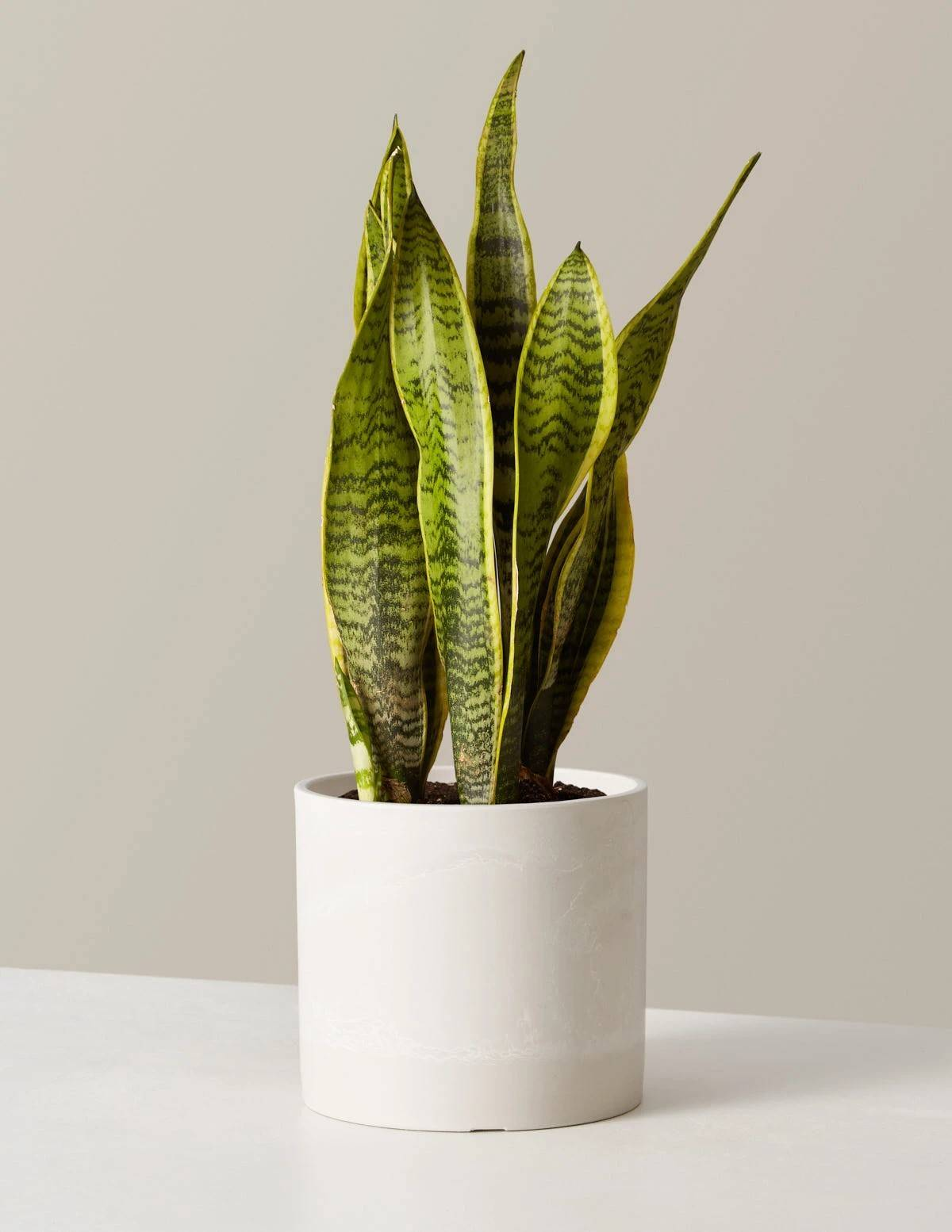 Popular Houseplants that You Can Manage to Keep Alive