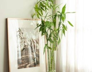 12 Best Low-Maintenance Indoor Houseplants