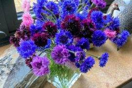 Grow Your Garden: Beautiful Flowers to Plant in Autumn